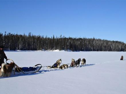 voyages chiens de traineaux Québec - panorama