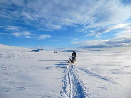 Voyages Chiens de traineaux Norvège - attelage en plaine