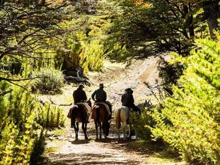 randonnee-foret-chevaux-argentine1