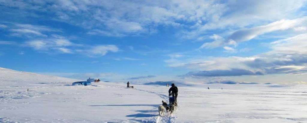 Laika Voyages - Voyages aventure - traineau en norvège