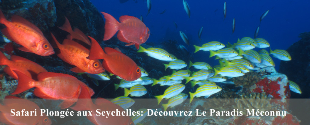 Croisière de plongée aux Seychelles